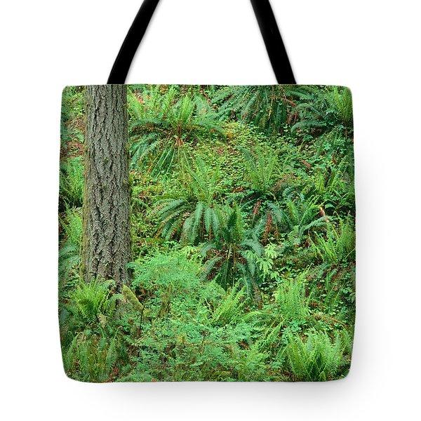 Hillside Ferns Tote Bag by Greg Vaughn - Printscapes