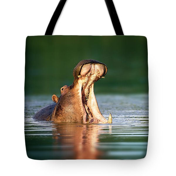 Hippopotamus Tote Bag by Johan Swanepoel