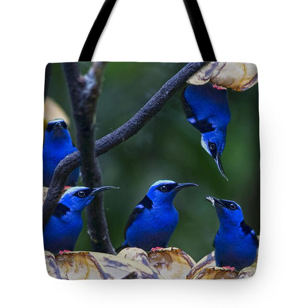 Honeycreeper Tote Bag by Betsy Knapp