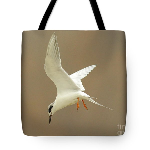 Hovering Tern Tote Bag by Robert Frederick