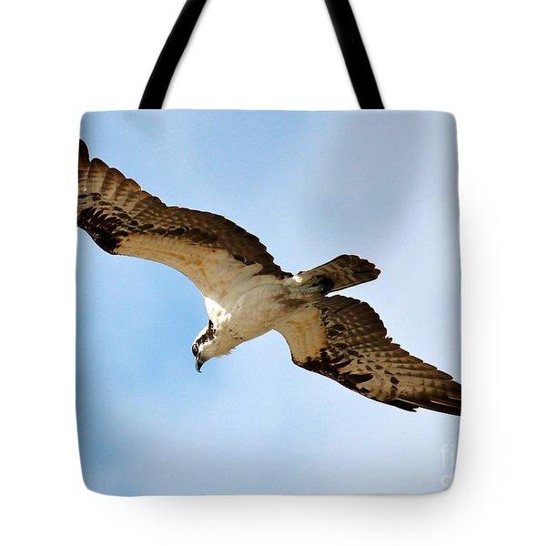 Hunter Osprey Tote Bag by Carol Groenen