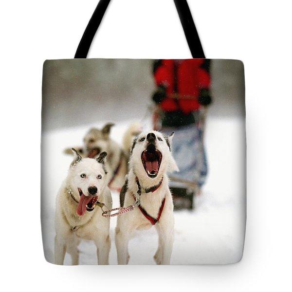 Husky Dog Racing Tote Bag by Axiom Photographic