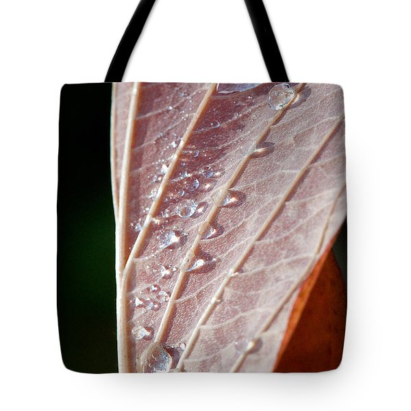 Icy Fall Morning Tote Bag by Lisa Knechtel
