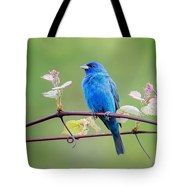 Indigo Bunting Perched Tote Bag by Bill Wakeley