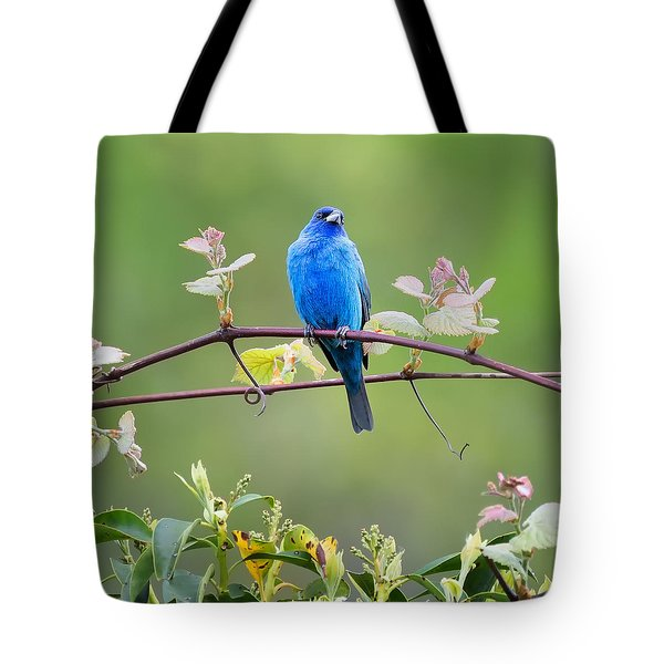 Indigo Bunting Perched Square Tote Bag by Bill Wakeley