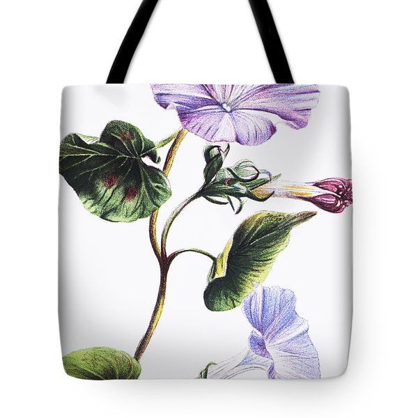 Isabella Sinclair - Pohue Tote Bag by Hawaiian Legacy Archive - Printscapes