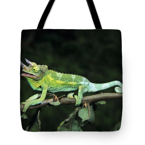Jacksons Chameleon on Branch Tote Bag by Dave Fleetham - Printscapes