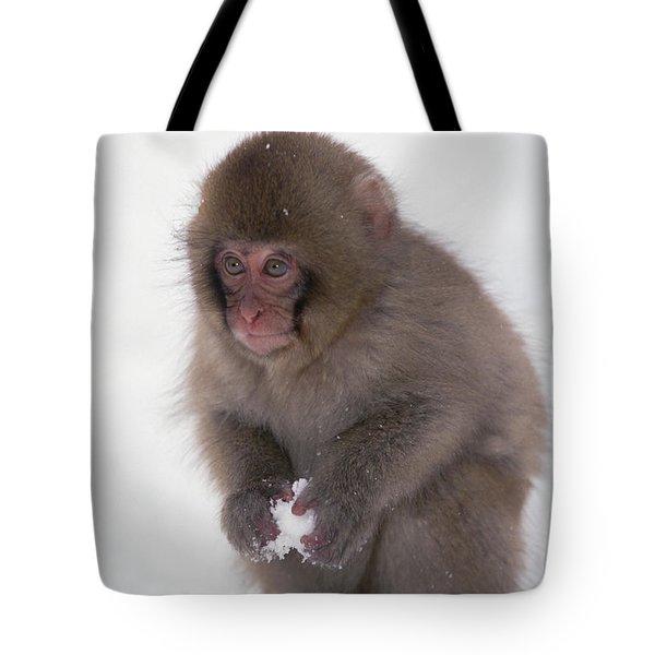 Japanese Macaque Macaca Fuscata Baby Tote Bag by Konrad Wothe