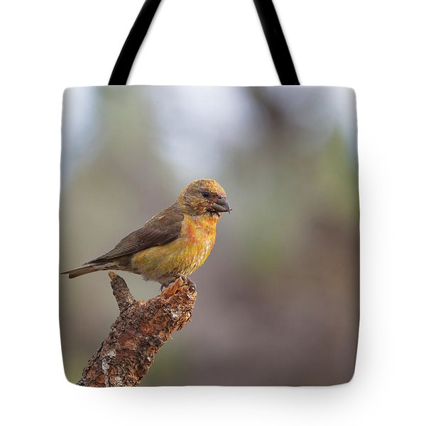 Juvenile Male Red Crossbill Tote Bag by Doug Lloyd