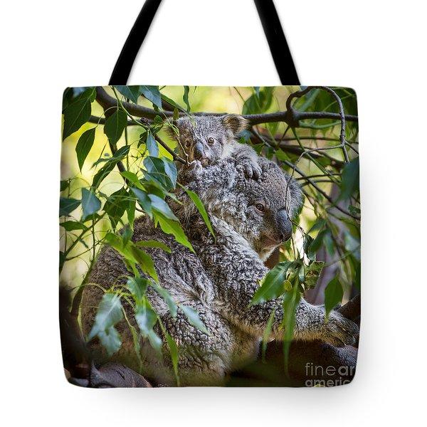 Koala Joey Tote Bag by Jamie Pham