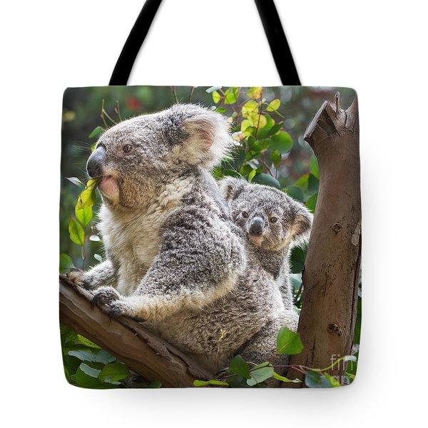 Koala Joey On Mom Tote Bag by Jamie Pham