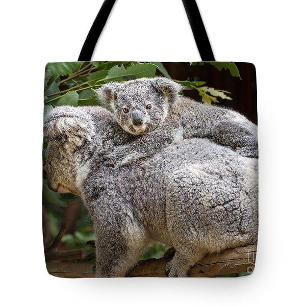 Koala Joey Piggy Back Tote Bag by Jamie Pham