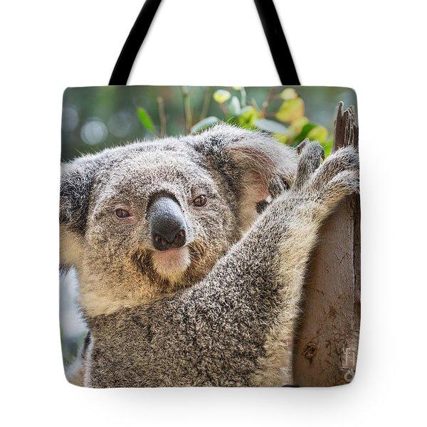 Koala On Tree Tote Bag by Jamie Pham