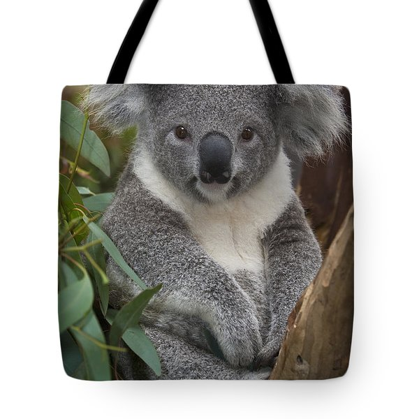 Koala Phascolarctos Cinereus Tote Bag by Zssd