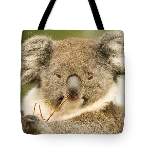 Koala Snack Tote Bag by Mike  Dawson