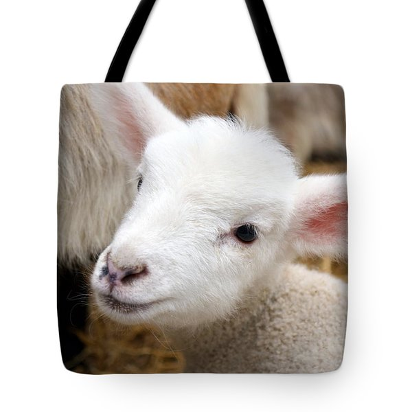 Lamb Tote Bag by Michelle Calkins