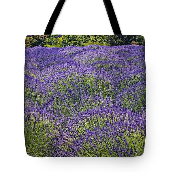 Lavender field Tote Bag by Garry Gay