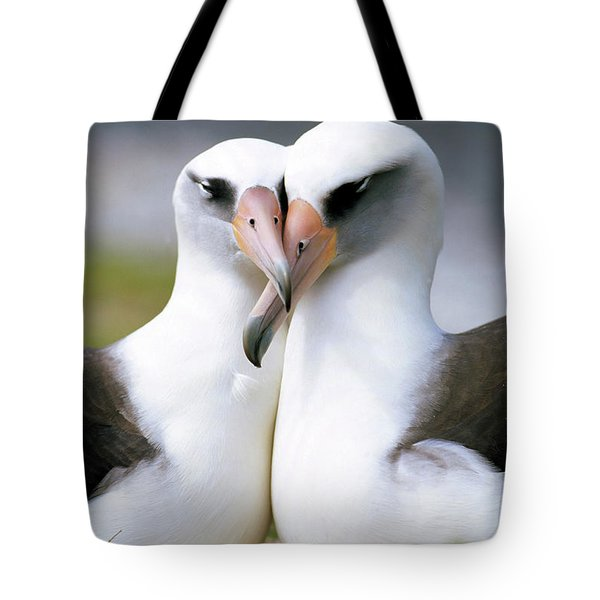 Laysan Albatross Phoebastria Tote Bag by Tui De Roy