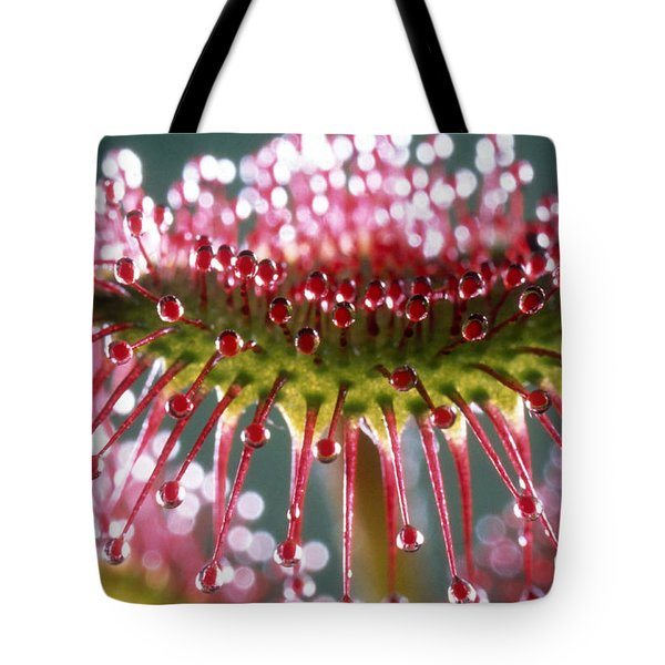 Leaf of Sundew Tote Bag by Nuridsany et Perennou and Photo Researchers