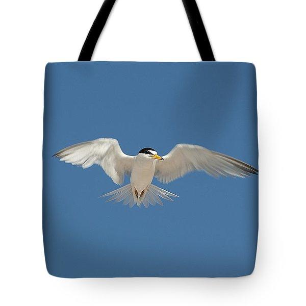 Least Tern 2 Tote Bag by Kenneth Albin