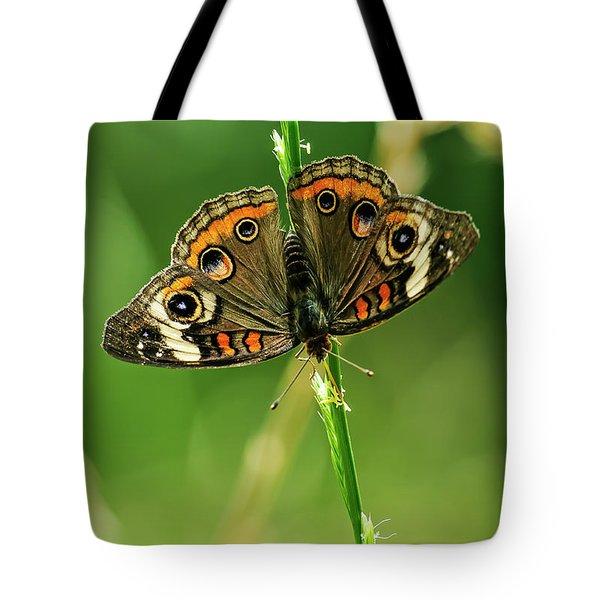 Lepidoptera Tote Bag by Charles Dobbs