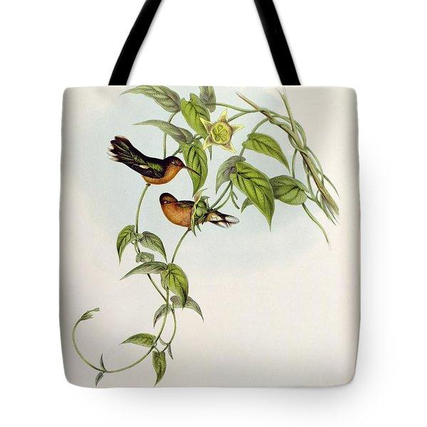 Leucippus Fallax Tote Bag by John Gould
