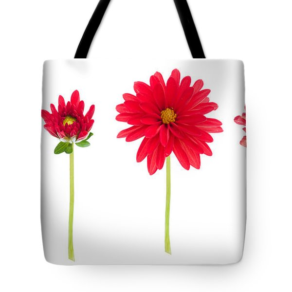 life and death of a dahlia Tote Bag by Meirion Matthias