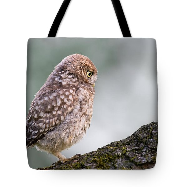 Little Owl Chick Practising Hunting Skills Tote Bag by Roeselien Raimond