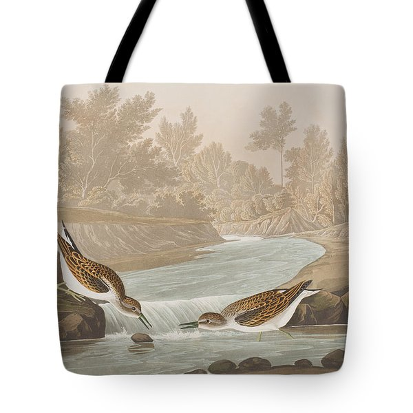Little Sandpiper Tote Bag by John James Audubon