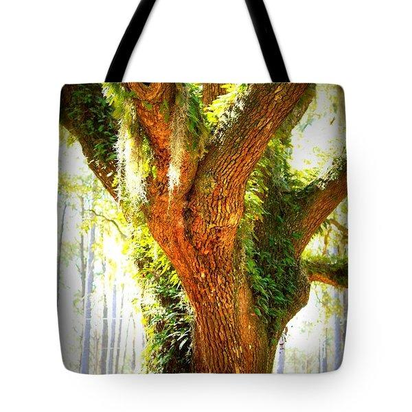 Live Oak With Cypress Beyond Tote Bag by Carol Groenen