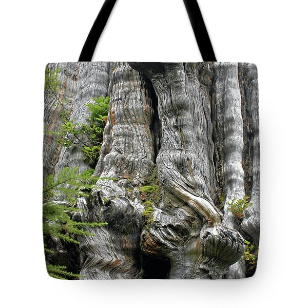 Long Views - Giant Western Red Cedar Olympic National Park WA Tote Bag by Christine Till