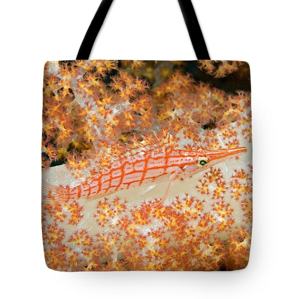 Longnose Hawkfish Tote Bag by Dave Fleetham - Printscapes