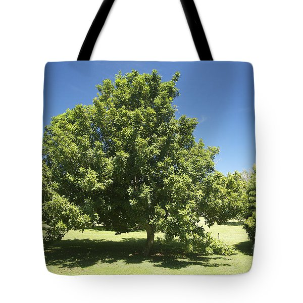 Macadamia Nut Tree Tote Bag by Kicka Witte - Printscapes