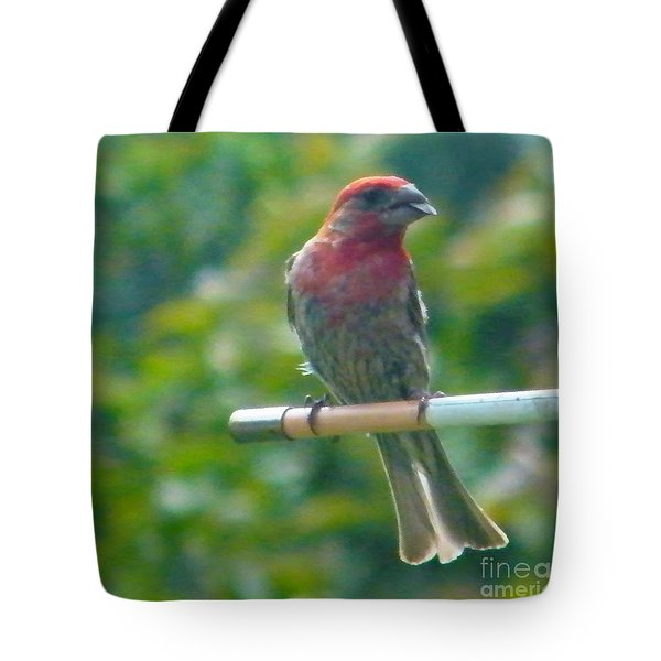 Male Crossbill With Sunflower Seed    August  Indiana Tote Bag by Rory Cubel