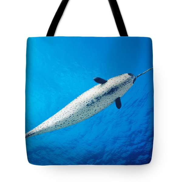 Male Narwhal Tote Bag by Dave Fleetham - Printscapes