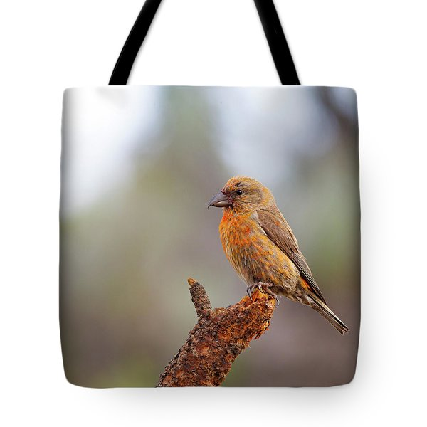 Male Red Crossbill Tote Bag by Doug Lloyd