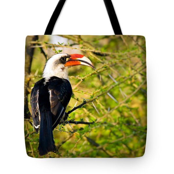 Male Von Der Decken's Hornbill Tote Bag by Adam Romanowicz