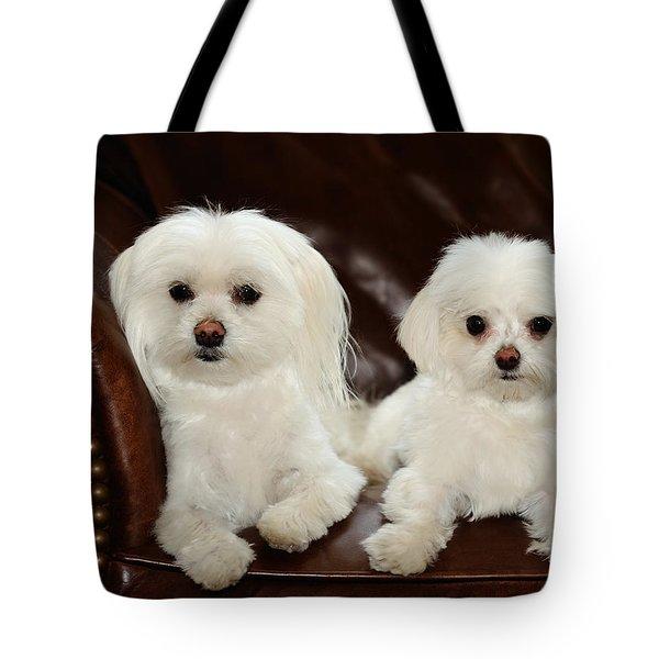 Maltese - Spa Day Tote Bag by Mike Hendren