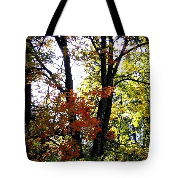 Maple Mania 16 Tote Bag by Will Borden