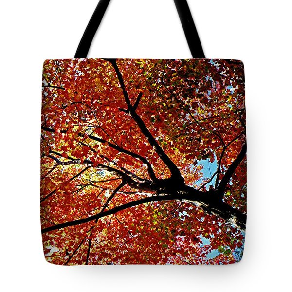 Maple Tree In Autumn Glow Tote Bag by Juergen Roth