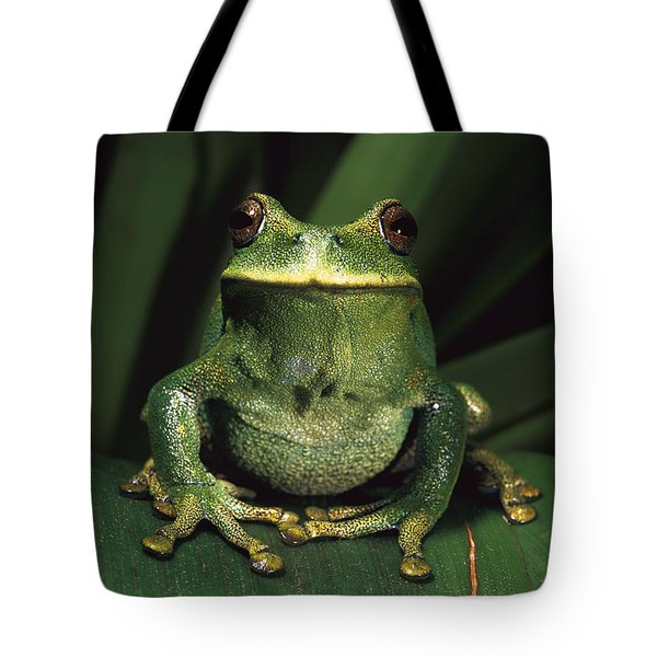 Marsupial Frog Gastrotheca Orophylax Tote Bag by Pete Oxford