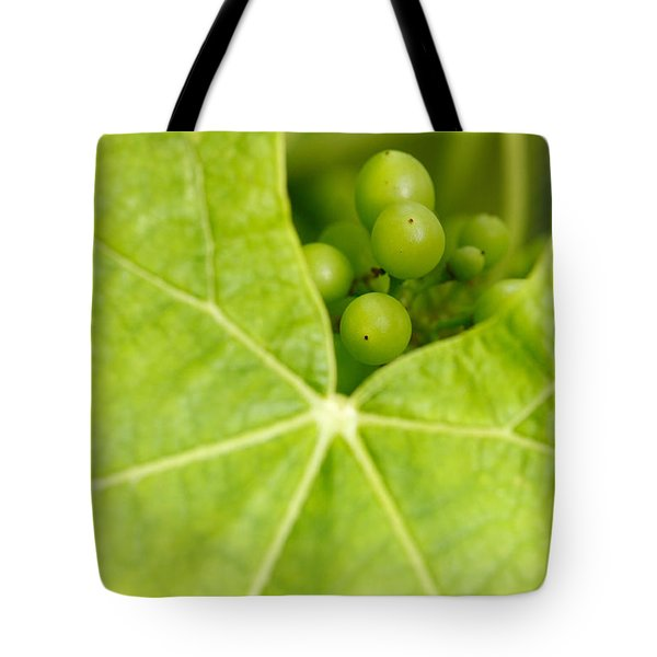 Maturing wine grapes Tote Bag by Gaspar Avila
