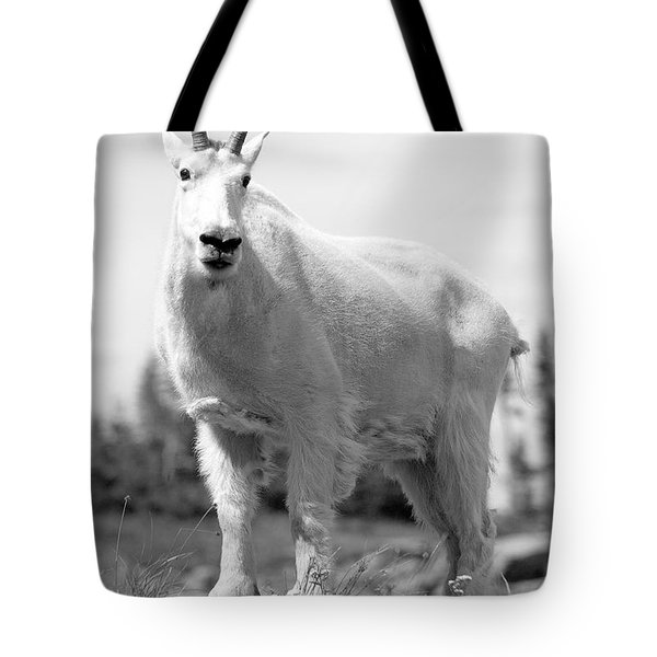 Mountain Goat Tote Bag by Sebastian Musial