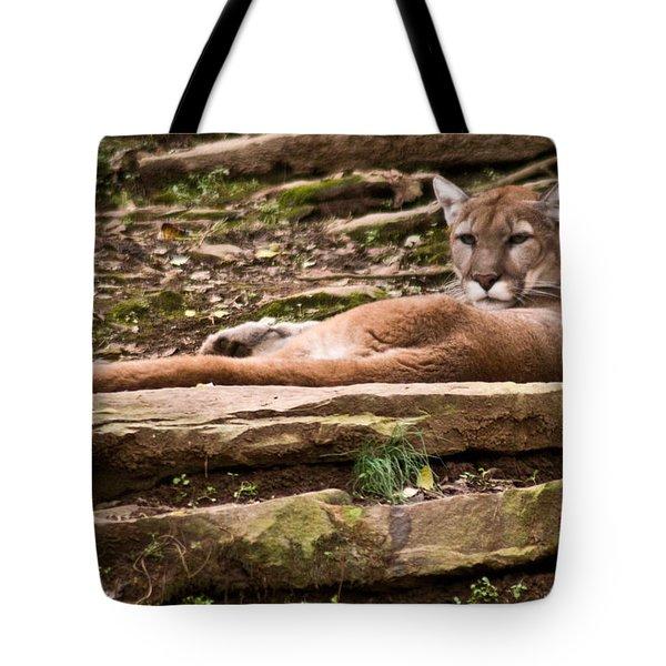 Mouontain Lion Resting Tote Bag by Douglas Barnett