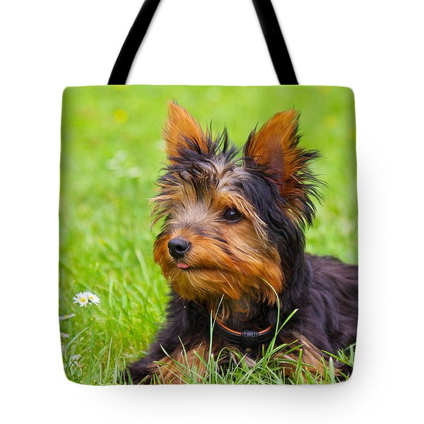 My Little Dog Tote Bag by Angela Doelling AD DESIGN Photo and PhotoArt