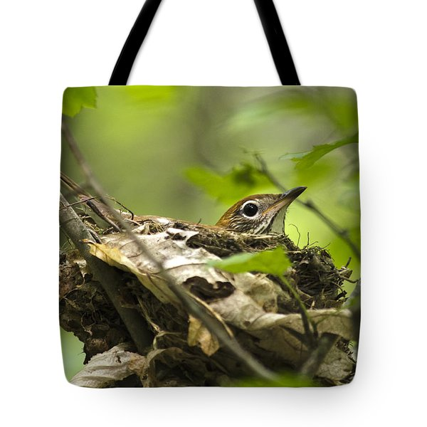 Nesting Birds - Wood Thrush Tote Bag by Christina Rollo