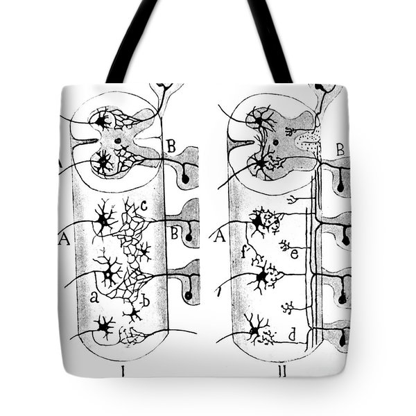 Neuroglia Cells Illustrated By Cajal Tote Bag by Science Source