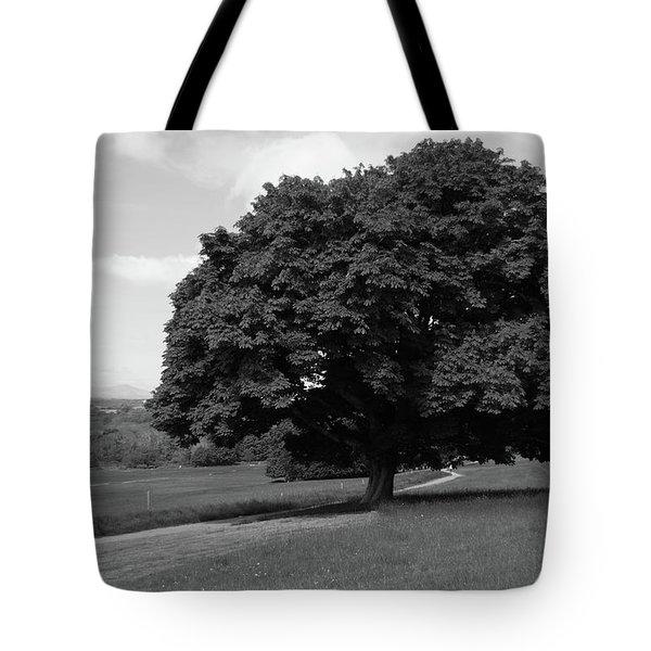 Oak Tree - Killarney National Park Tote Bag by Aidan Moran