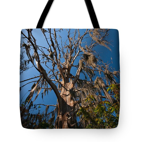 Old Cypress Tote Bag by Christopher Holmes