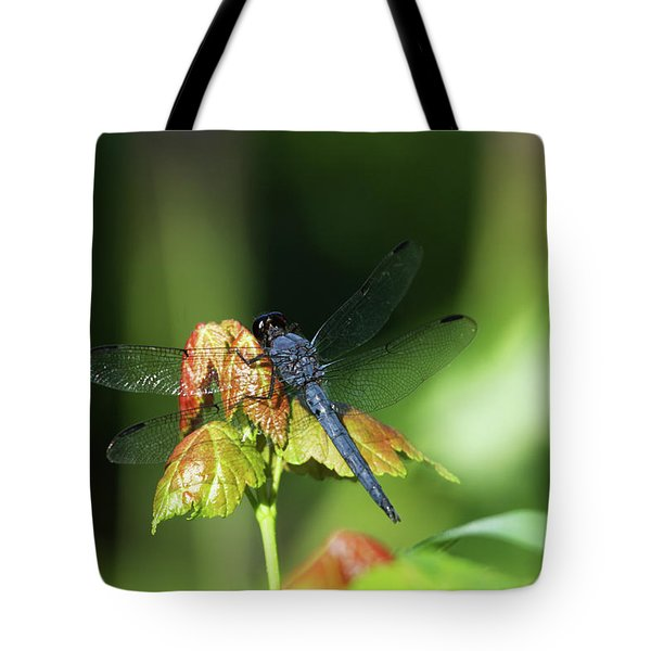 On A Leaf Tote Bag by Karol Livote